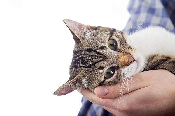 Знакомьтесь - кошка домашняя обыкновенная