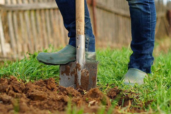 Рациональное использование почвы в саду